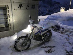 SERROW225 in Winter
